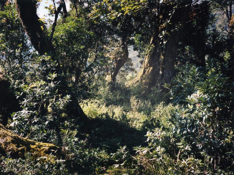 Mowgli's Forest, 2014, C-print, 112,5 X 150 cm, Edition of 2 + 2AP - © Vincent Delbrouck