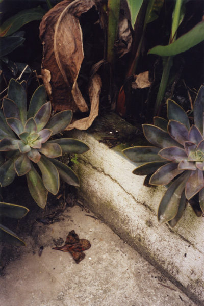 Roof Plants, 2009, 50 X 75 cm, Edition of 5 + 2AP - © Vincent Delbrouck