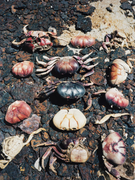 Crabs, 2017, C-print, 14,5 X 19,5 cm, Edition of 2 + 2AP - © Vincent Delbrouck