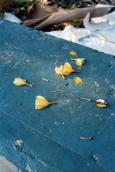 Petals, 2014, 40 X 60 cm, Edition of 5 + 2AP - © Vincent Delbrouck