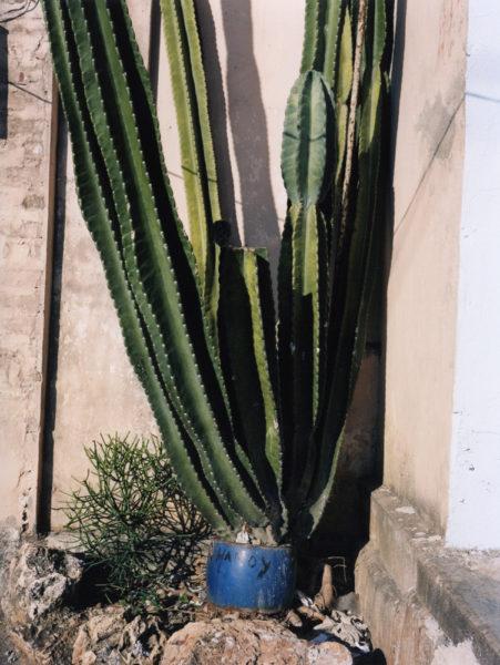 Cactus En Pot, 2014, 21 X 28 cm, Edition of 5 + 2AP - © Vincent Delbrouck