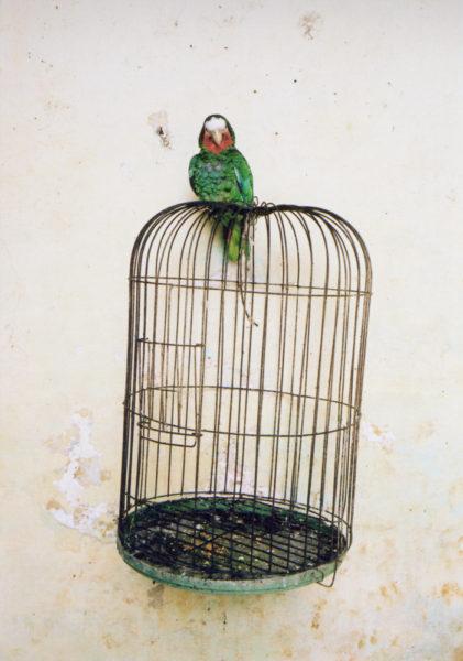 Parrot, 2014, C-print, 40 X 60 cm, Edition of 5 + 2AP - © Vincent Delbrouck