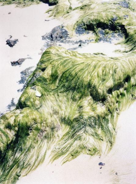 Algae, 2017, C-print, 45 X 60 cm, Edition of 3 + 2AP - © Vincent Delbrouck