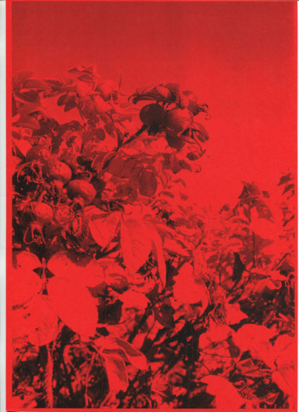 Red Dreams, 2015, Monochrome photocopy on color paper, 21 X 29,7 cm - © Vincent Delbrouck