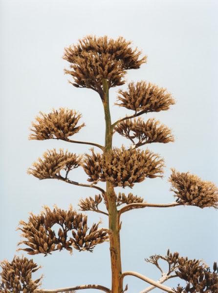 Greece, 2013, C-print, 45 X 60 cm, Edition of 3 + 2AP - © Vincent Delbrouck