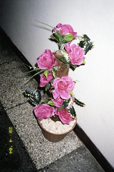 Roses, 2004, C-print, 32 X 48 cm, Edition of 3 + 2AP - © Vincent Delbrouck